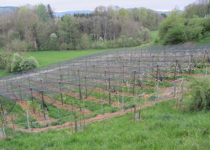 maura z'starzing familie hausjell obstbaumplantage 2011