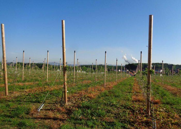 maura z'starzing familie hausjell obstbaumplantage