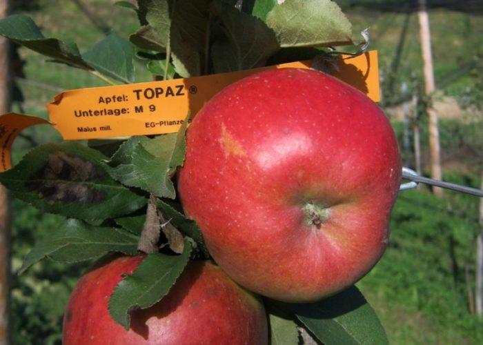 maura z'starzing familie hausjell obstbaumplantage 2010