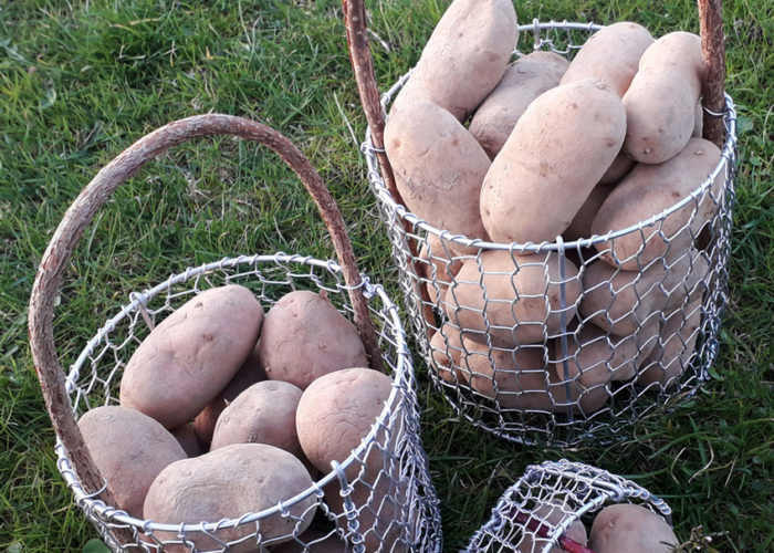 maura z'starzing familie hausjell produkte kartoffel